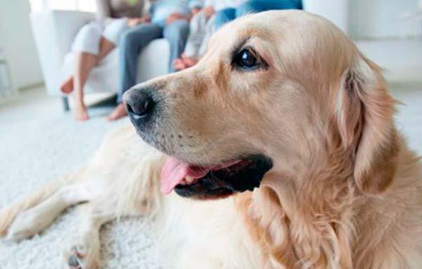 Como es vivir entre perros